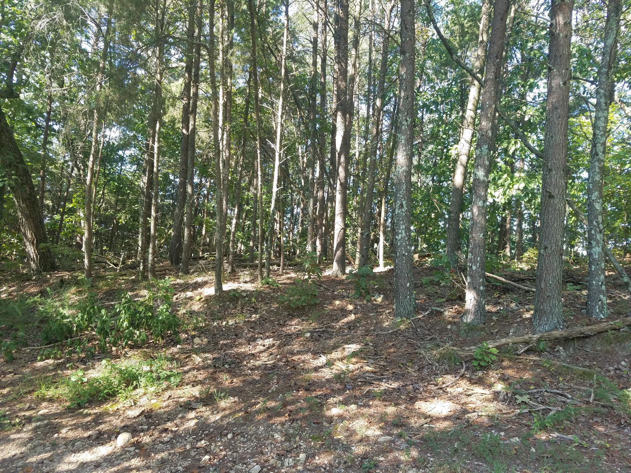 0 Arthur Ct, Waverly, TN 37185 - Waverly, TN real estate listing