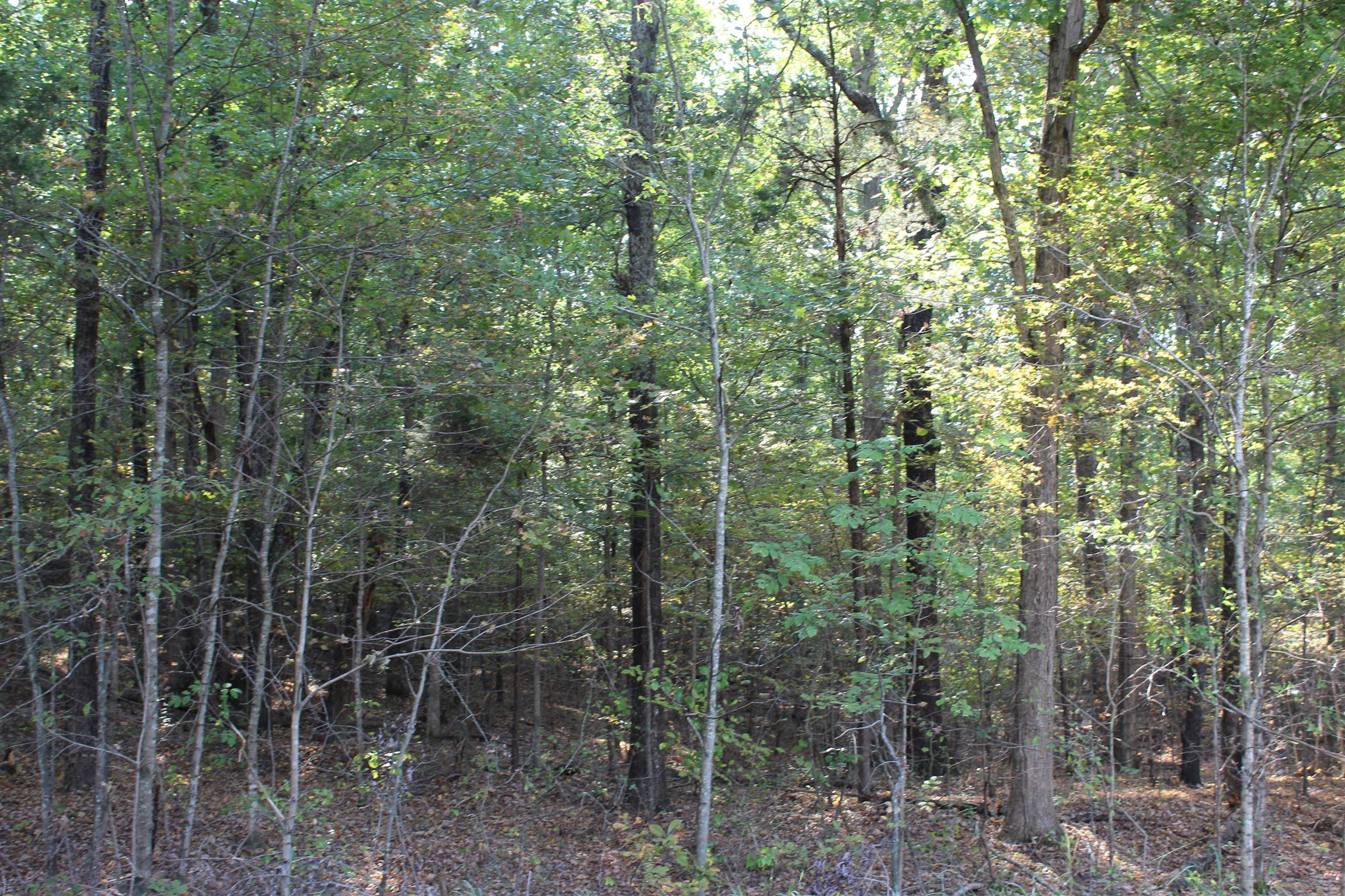 1 Highway 49 , Tennessee Ridge, TN 37178 - Tennessee Ridge, TN real estate listing