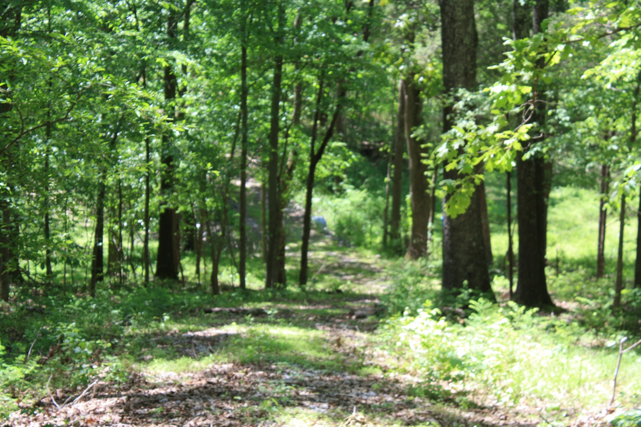 0 Guices Creek Road Property Photo - Cumberland City, TN real estate listing