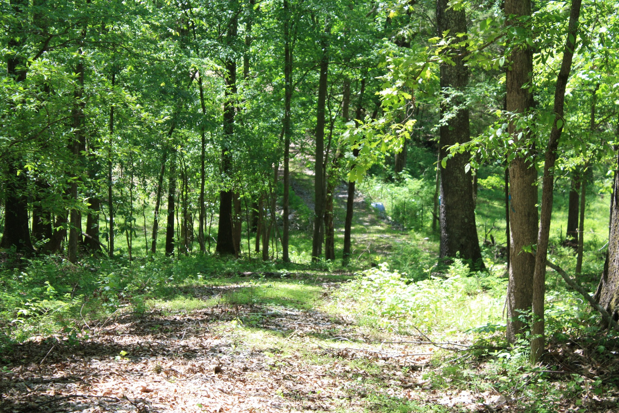 0 Guices Creek Road, Cumberland City, TN 37050 - Cumberland City, TN real estate listing