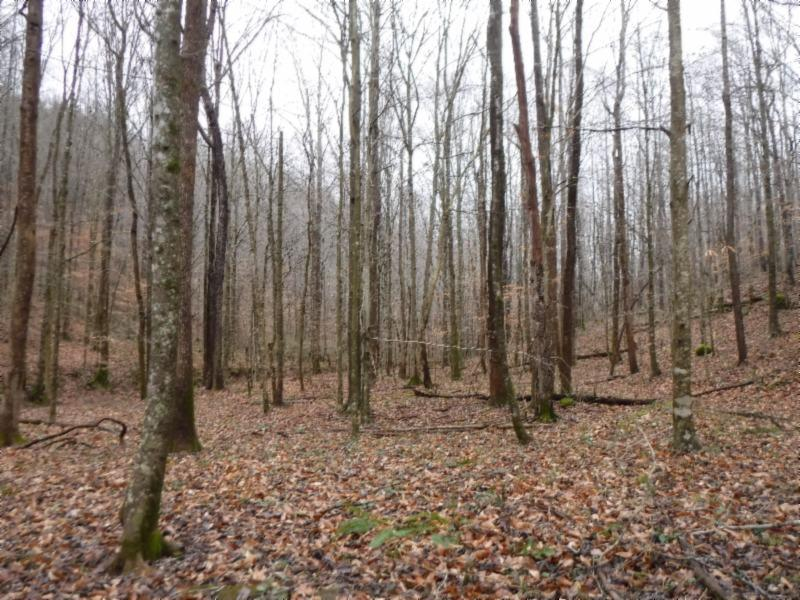 72 .71ac Hinds Chapel Rd, Jamestown, TN 38556 - Jamestown, TN real estate listing