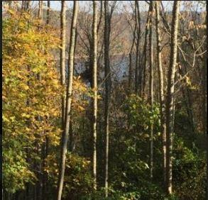 0 Sunny Point Road, Baxter, TN 38544 - Baxter, TN real estate listing