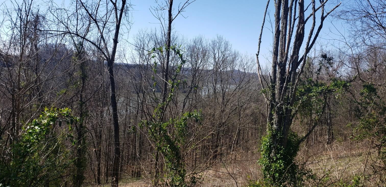 111 Harbor Pointe Dr Property Photo - Silver Point, TN real estate listing