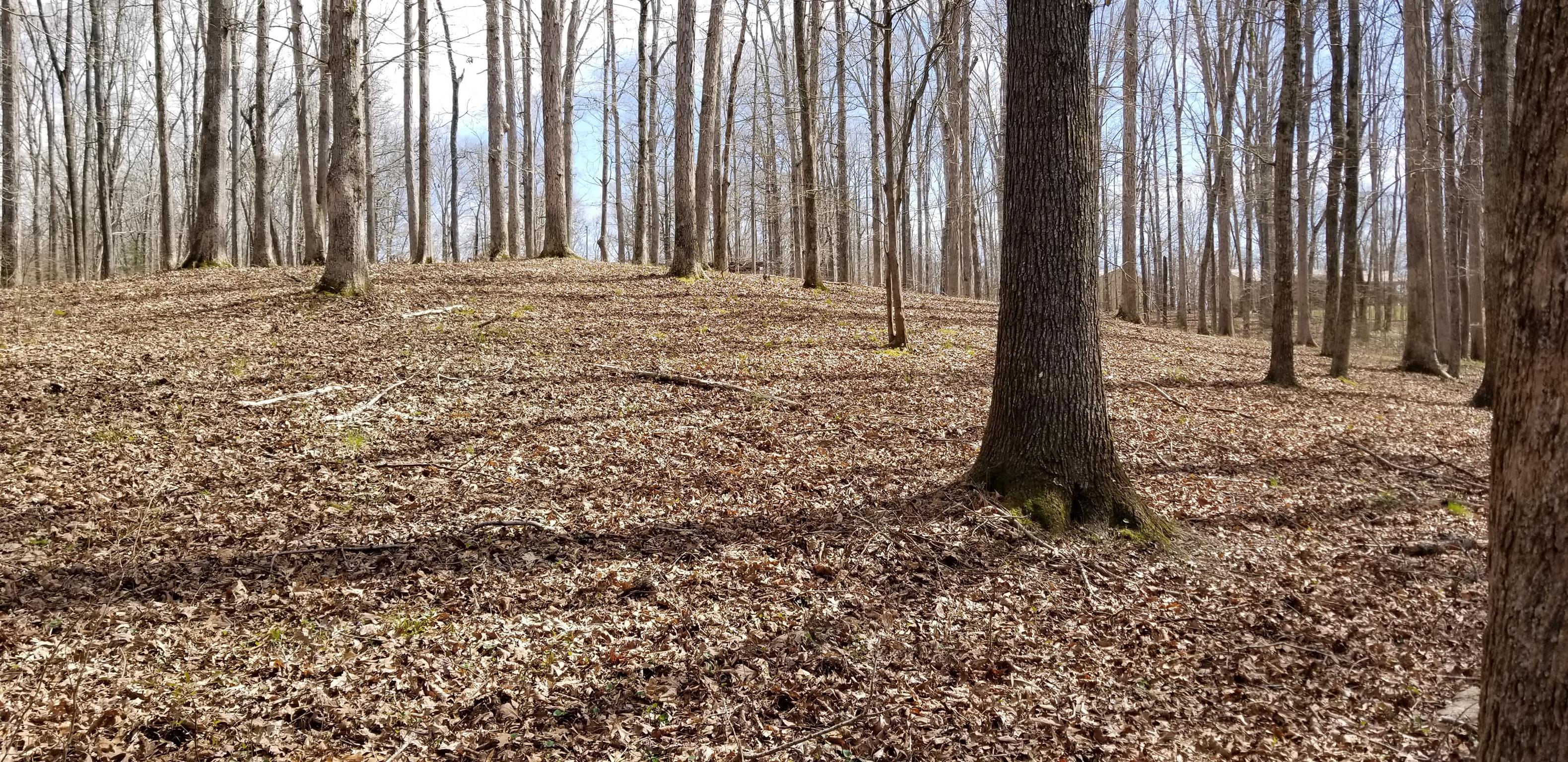 0 Driftwood Dr, Lobelville, TN 37097 - Lobelville, TN real estate listing