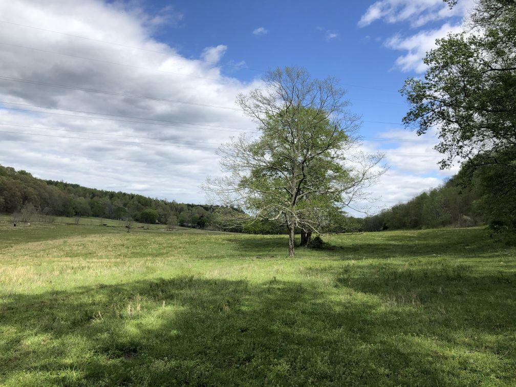 69.7 Ac Cattle Farm Real Estate Listings Main Image