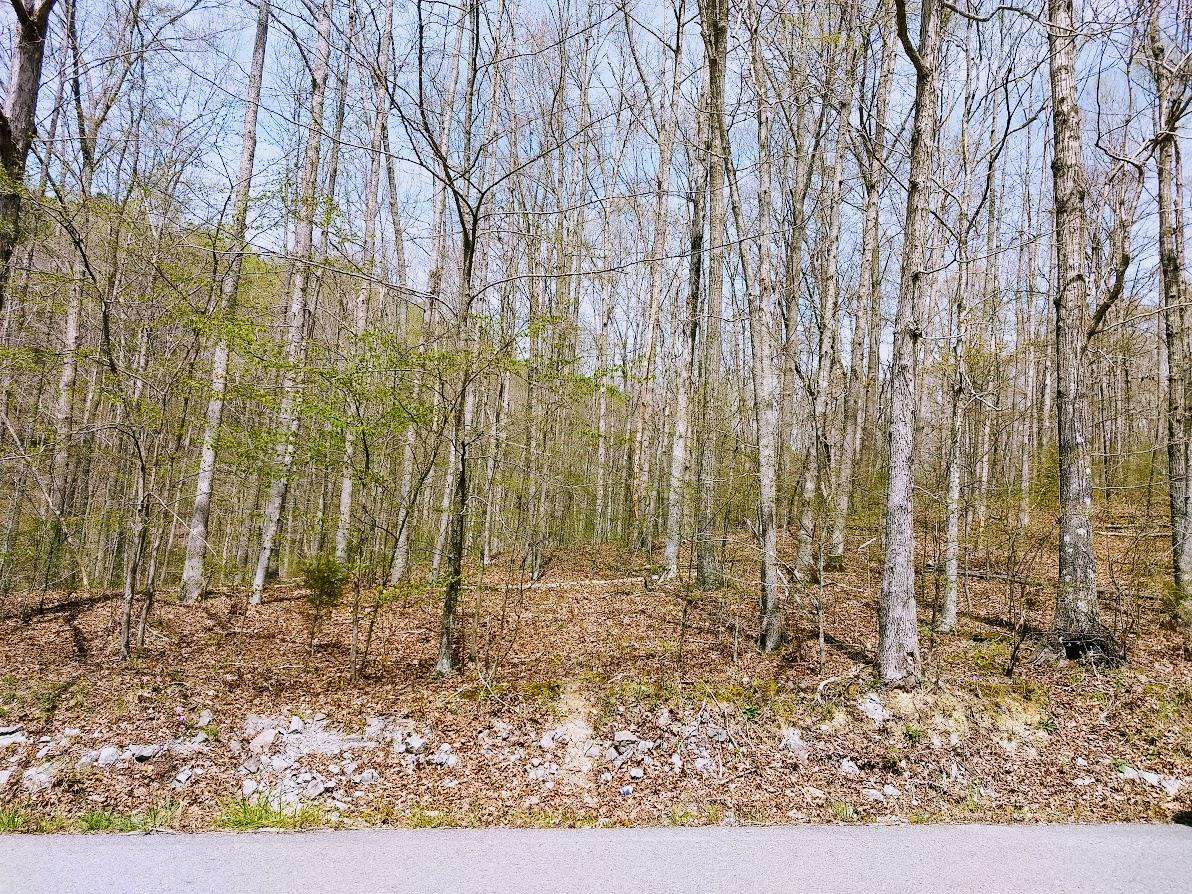0 Barnhill Rd, Primm Springs, TN 38476 - Primm Springs, TN real estate listing