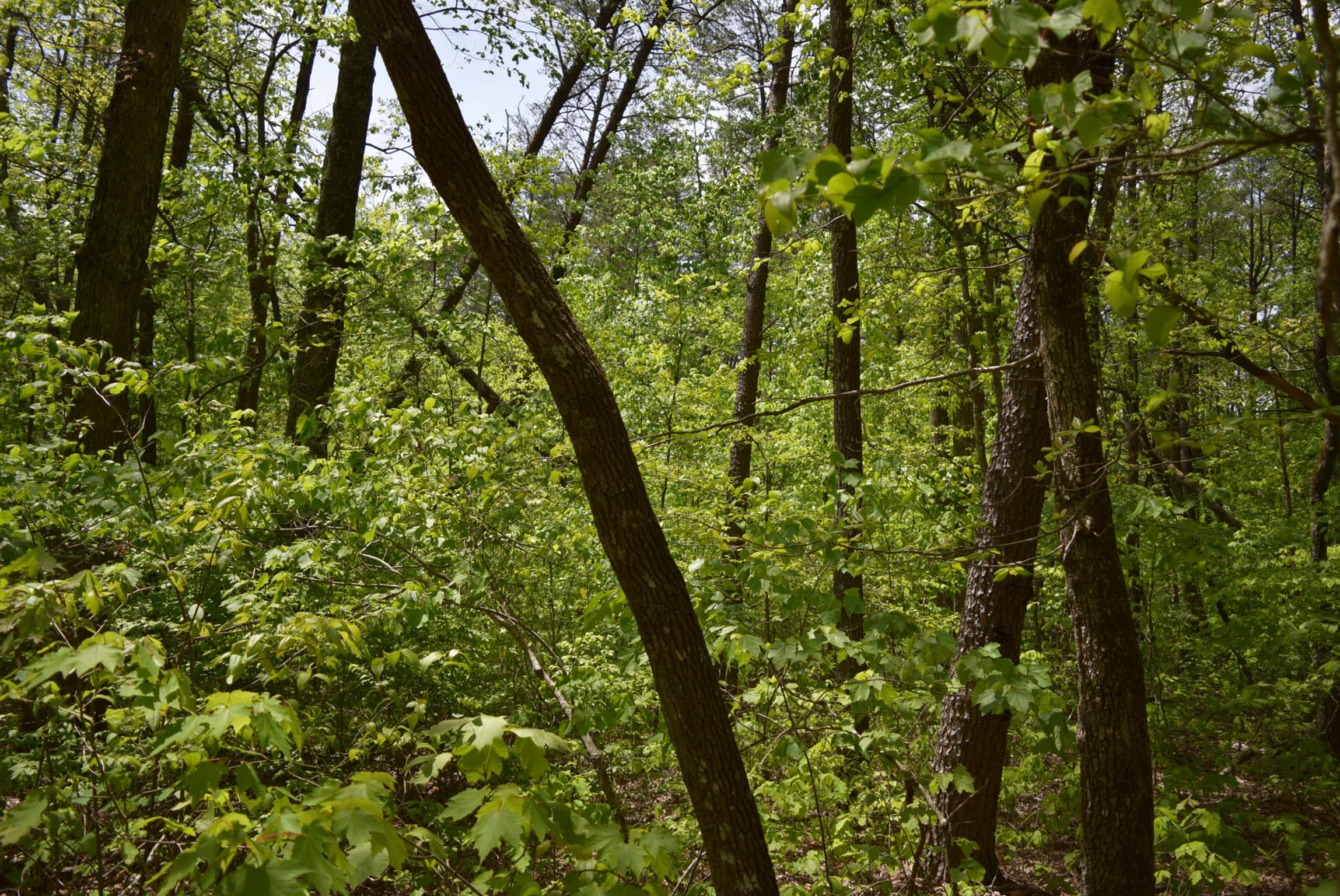 0 Turley Rd S of Property Photo - Altamont, TN real estate listing