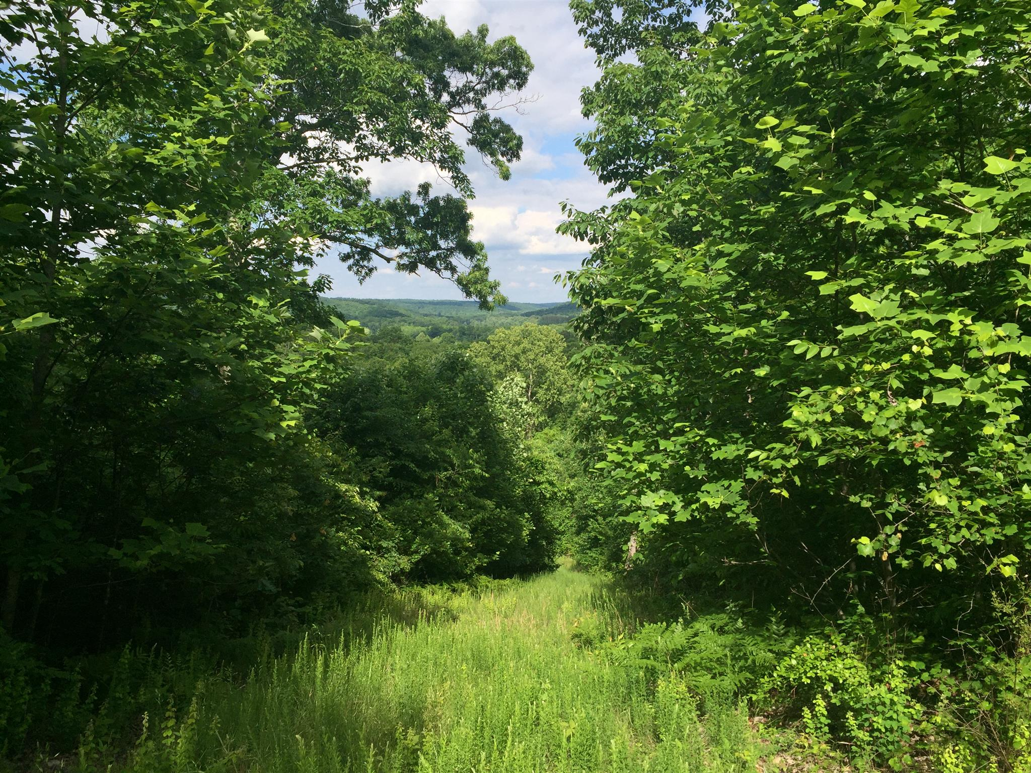 0 Bunches Chapel Rd, Parsons, TN 38363 - Parsons, TN real estate listing