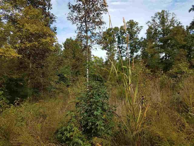 0 Pug Ln Property Photo - Parsons, TN real estate listing