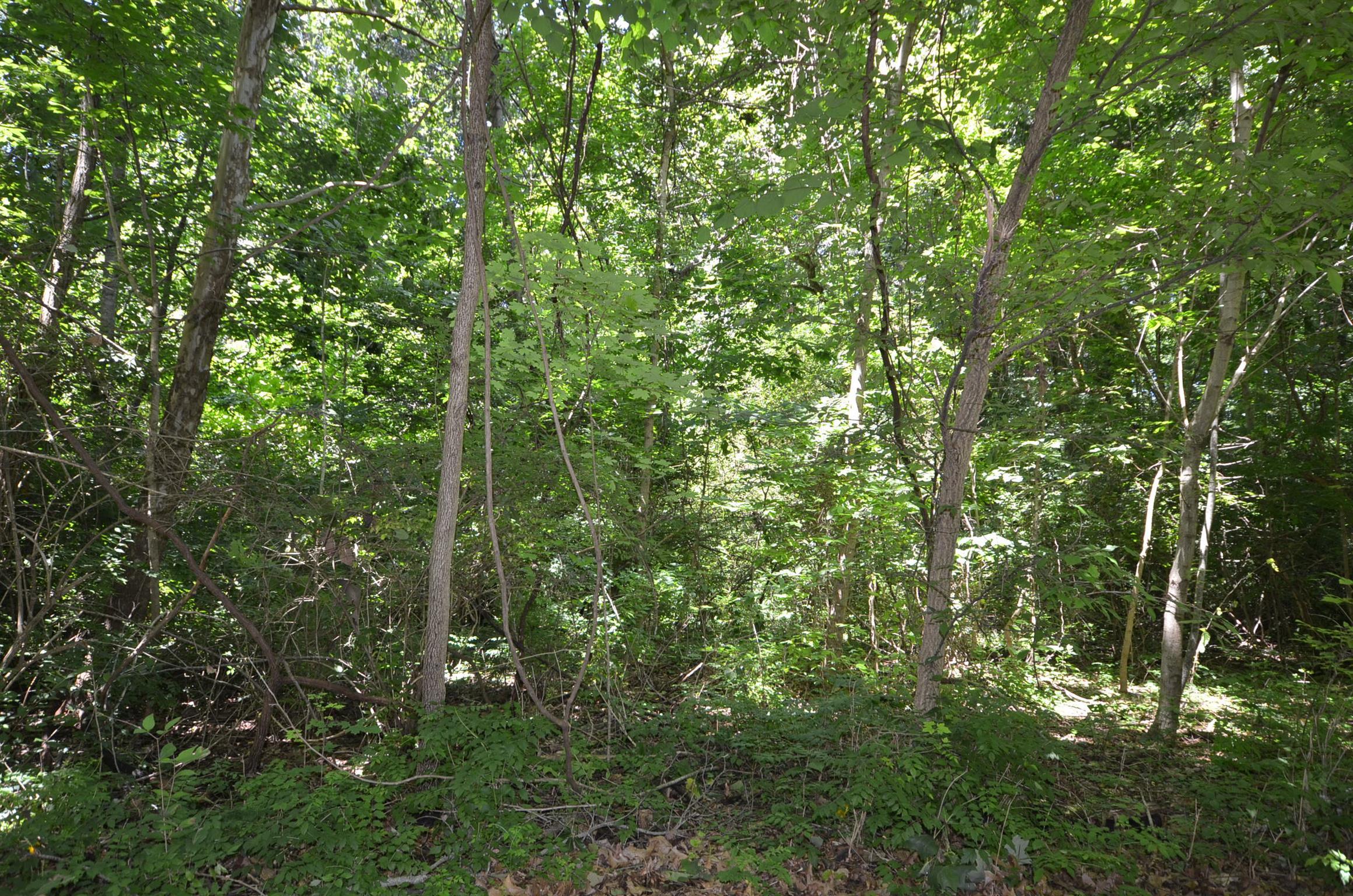 11 Cherokee Trail, Clarksville, TN 37043 - Clarksville, TN real estate listing