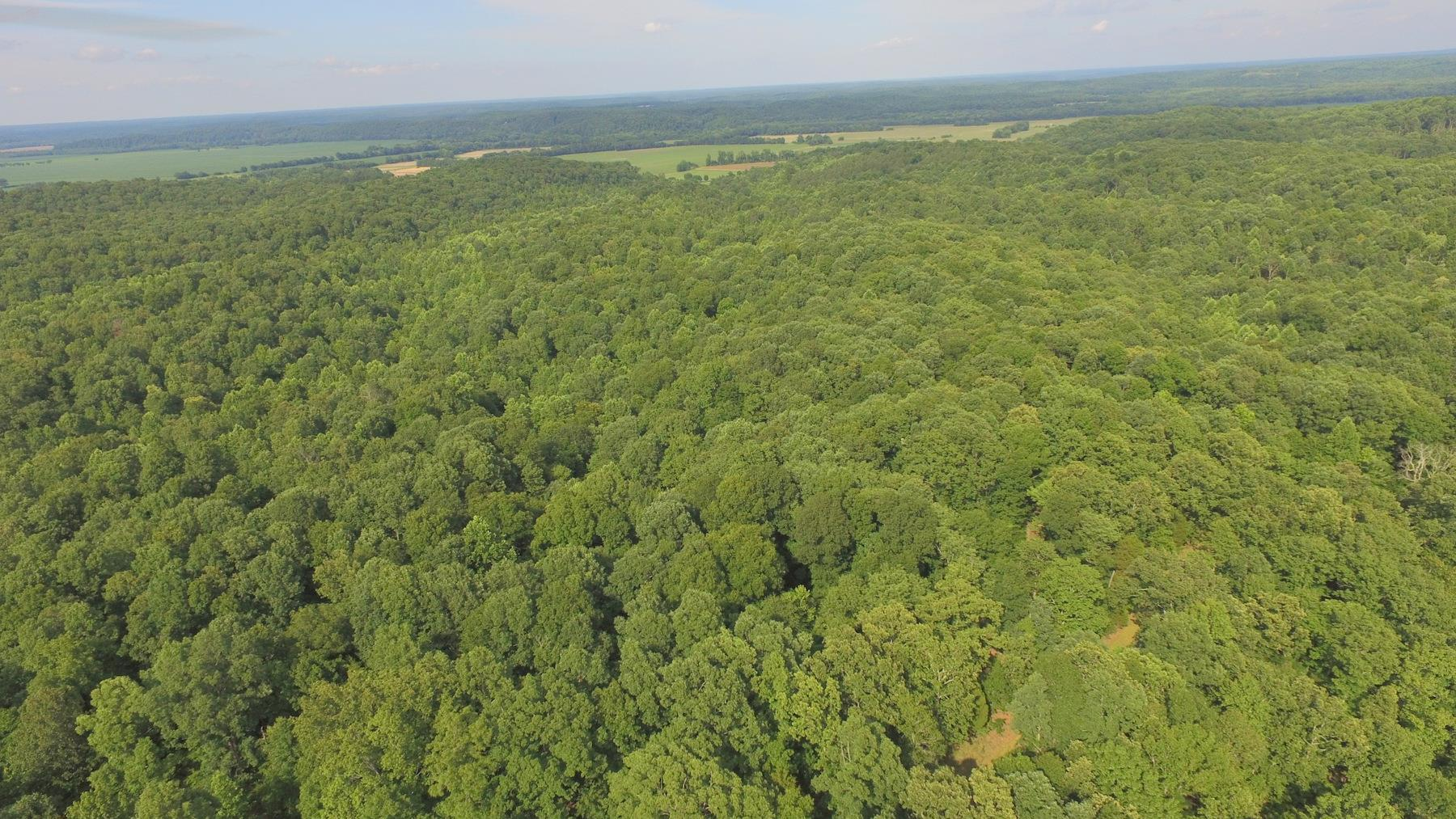 125 Acres Of Hardwood Real Estate Listings Main Image