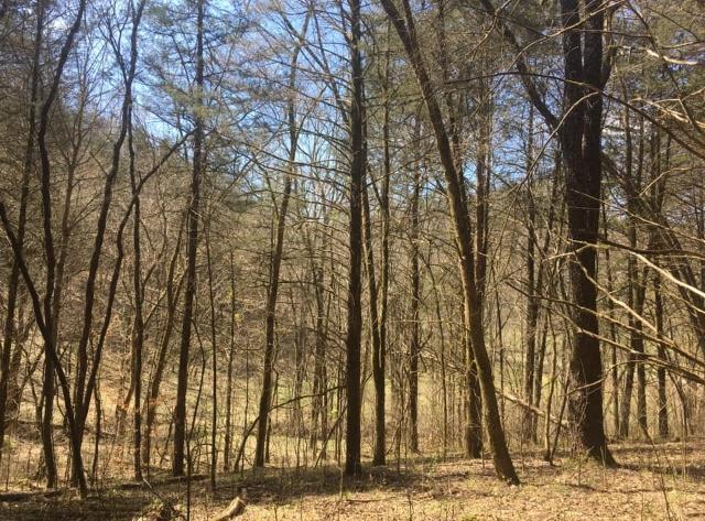 719 Hunting Creek Rd, Whitleyville, TN 38588 - Whitleyville, TN real estate listing