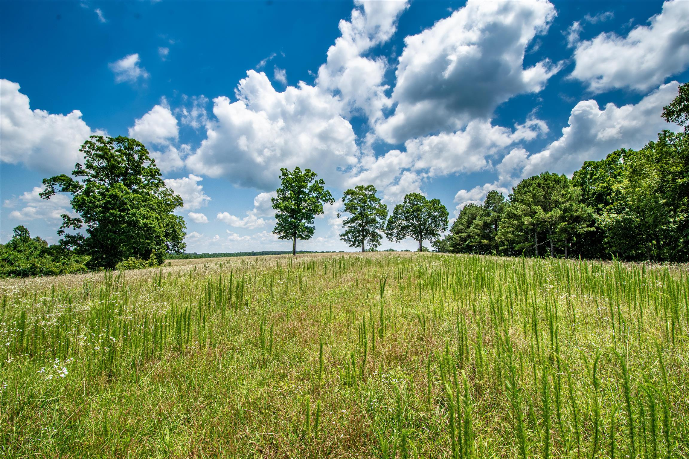 202 Weakley Loop Rd, Ethridge, TN 38456 - Ethridge, TN real estate listing
