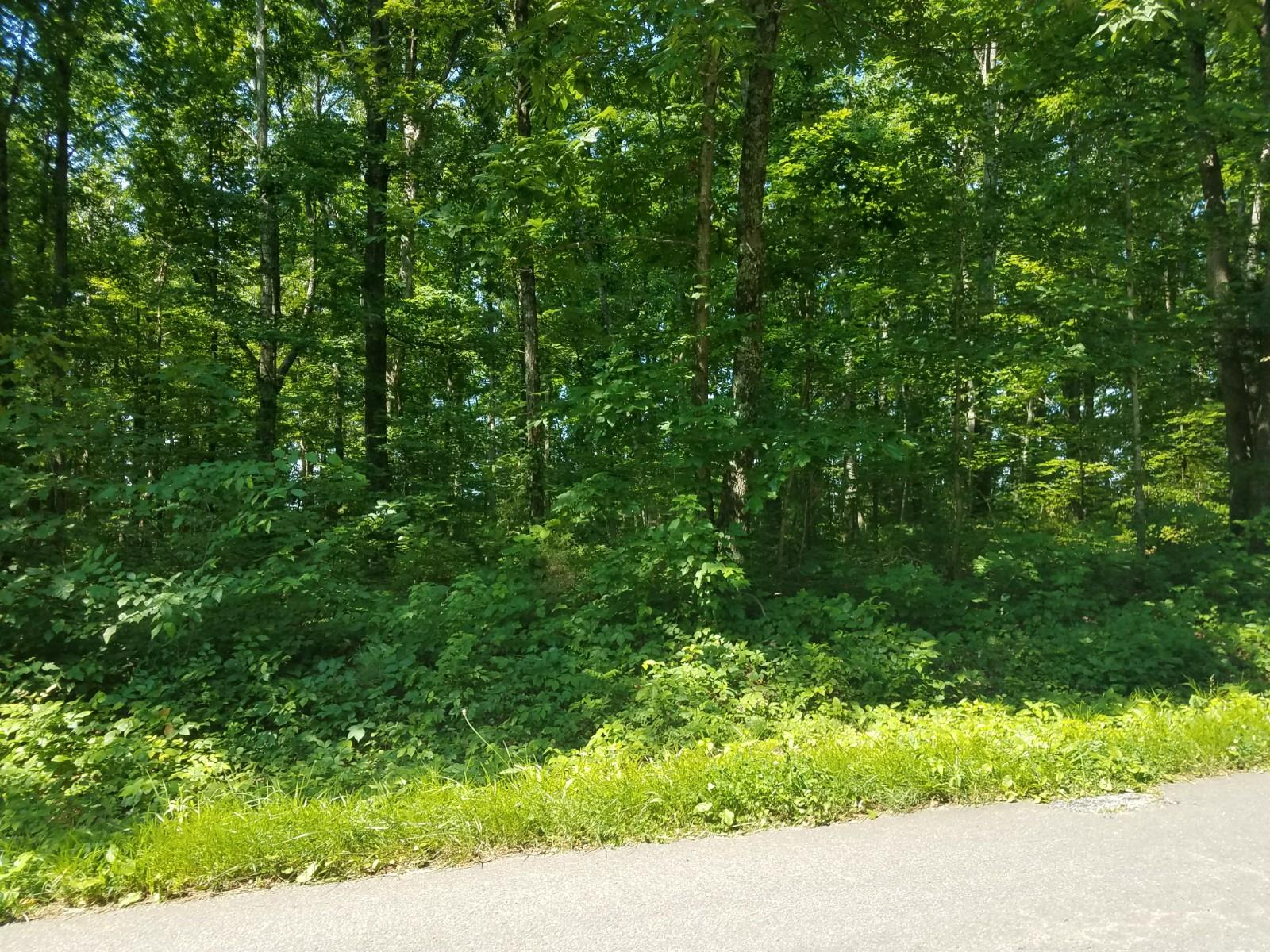 0 Pinewood Rd Property Photo - Fairview, TN real estate listing