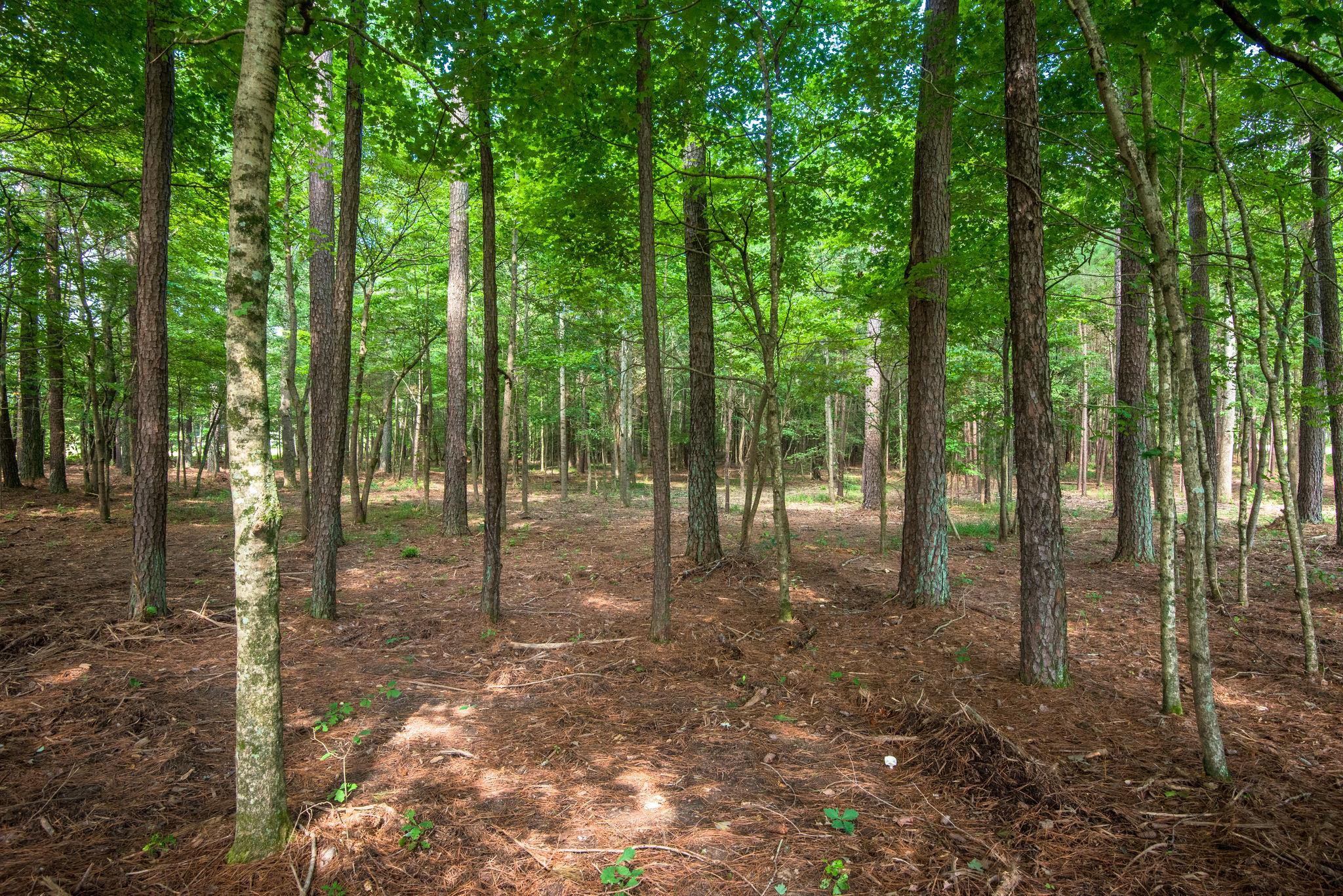 7211 Bahne Rd, Fairview, TN 37062 - Fairview, TN real estate listing