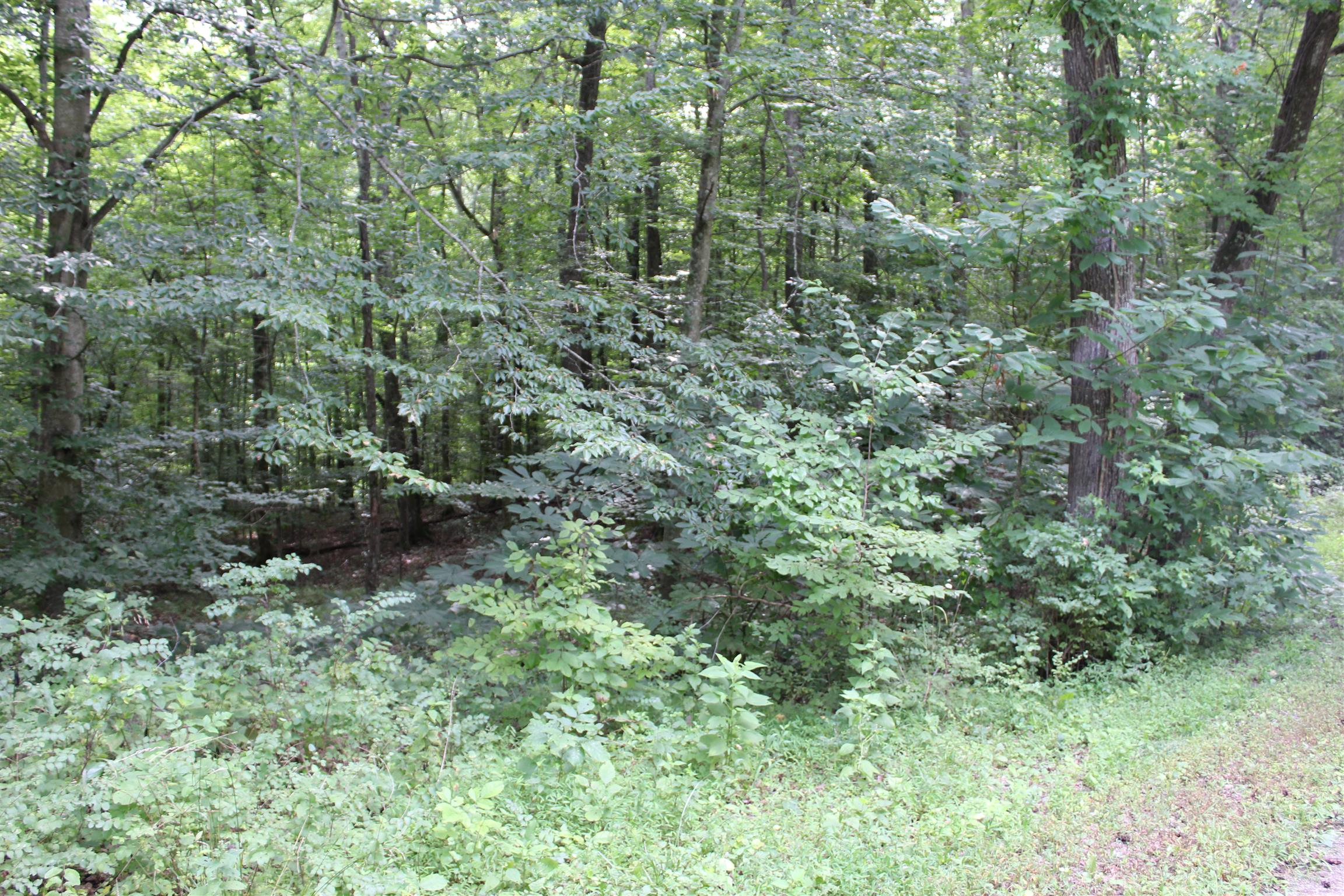16 Patricia Cir Property Photo - Indian Mound, TN real estate listing