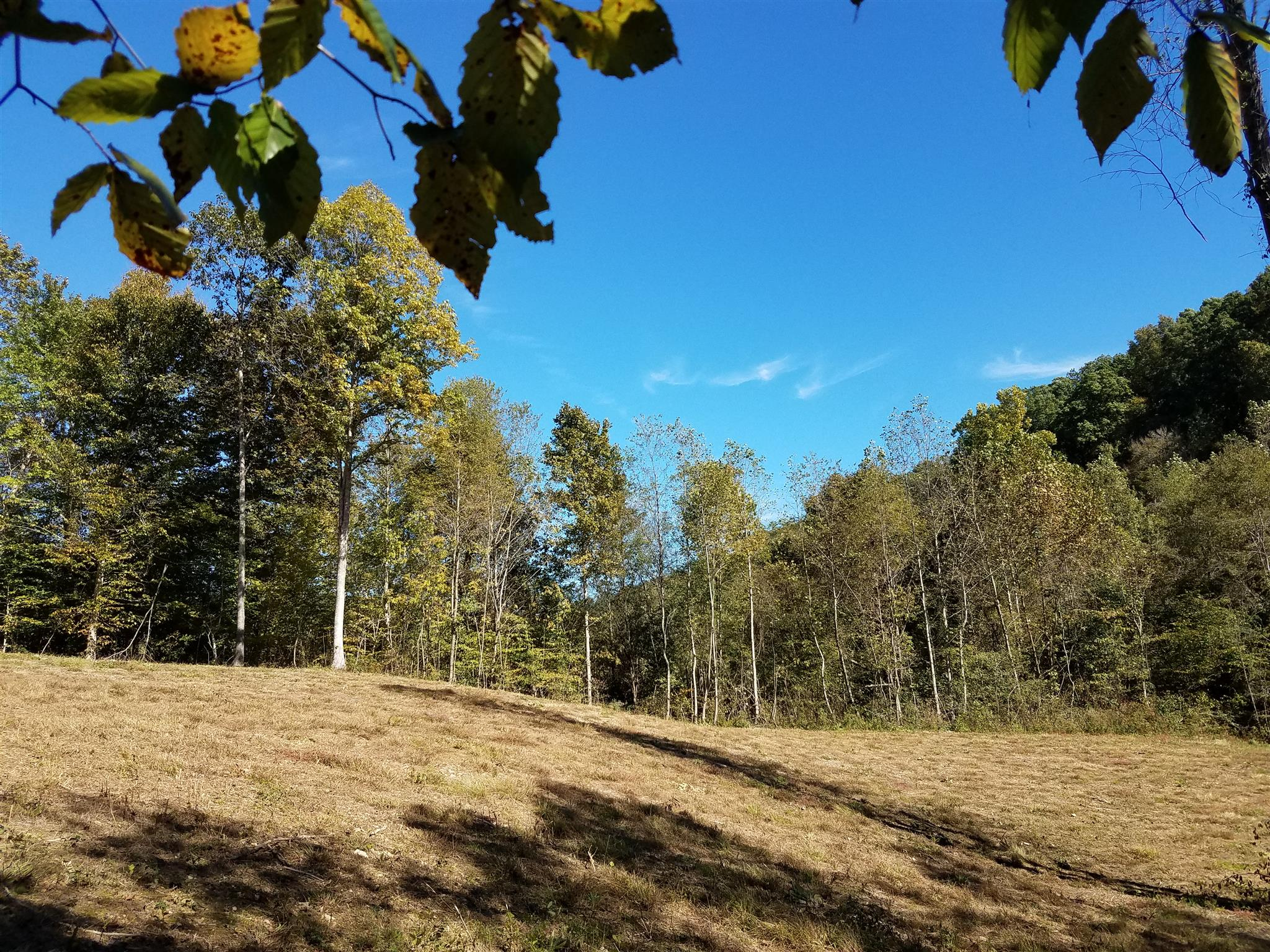 4 POPLAR RIDGE - LOT #4, Primm Springs, TN 38476 - Primm Springs, TN real estate listing