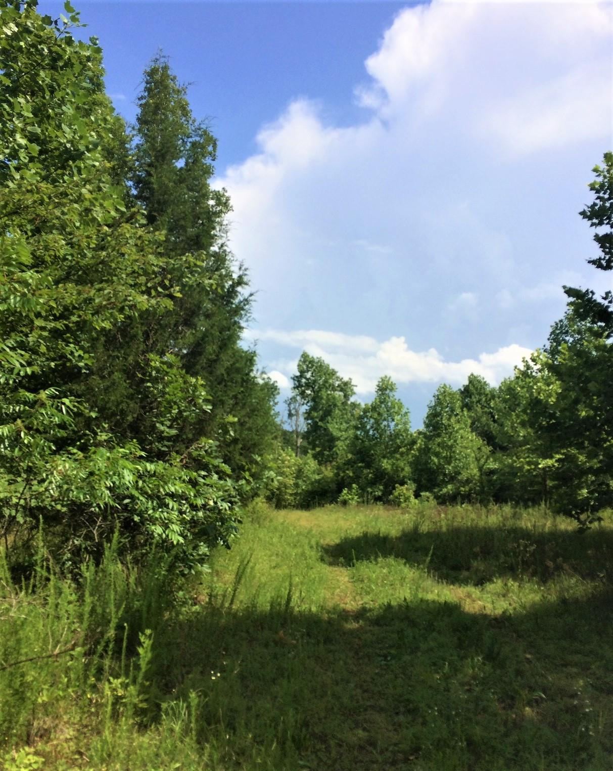 0 Bohannon Landing Rd, Sugar Tree, TN 38380 - Sugar Tree, TN real estate listing