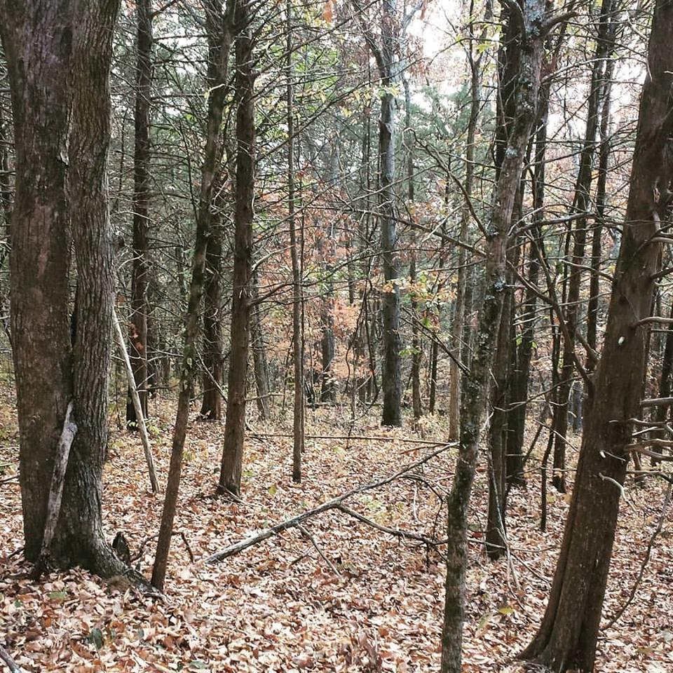 0 Ward Hollow Road, Brush Creek, TN 38547 - Brush Creek, TN real estate listing