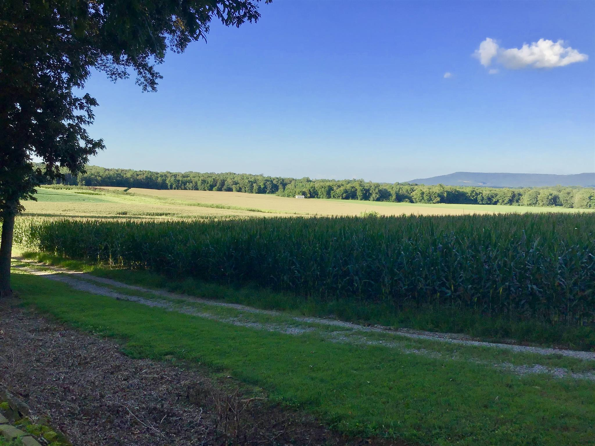 0 Swan Mill Rd, McMinnville, TN 37110 - McMinnville, TN real estate listing