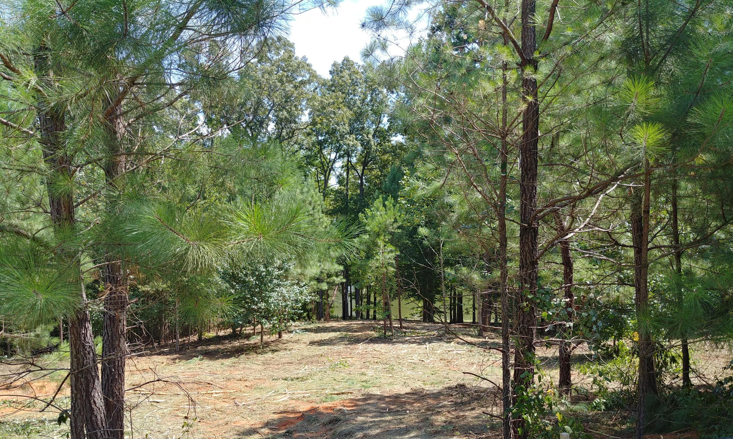 177 Excalibur Trl, Cedar Grove, TN 38321 - Cedar Grove, TN real estate listing
