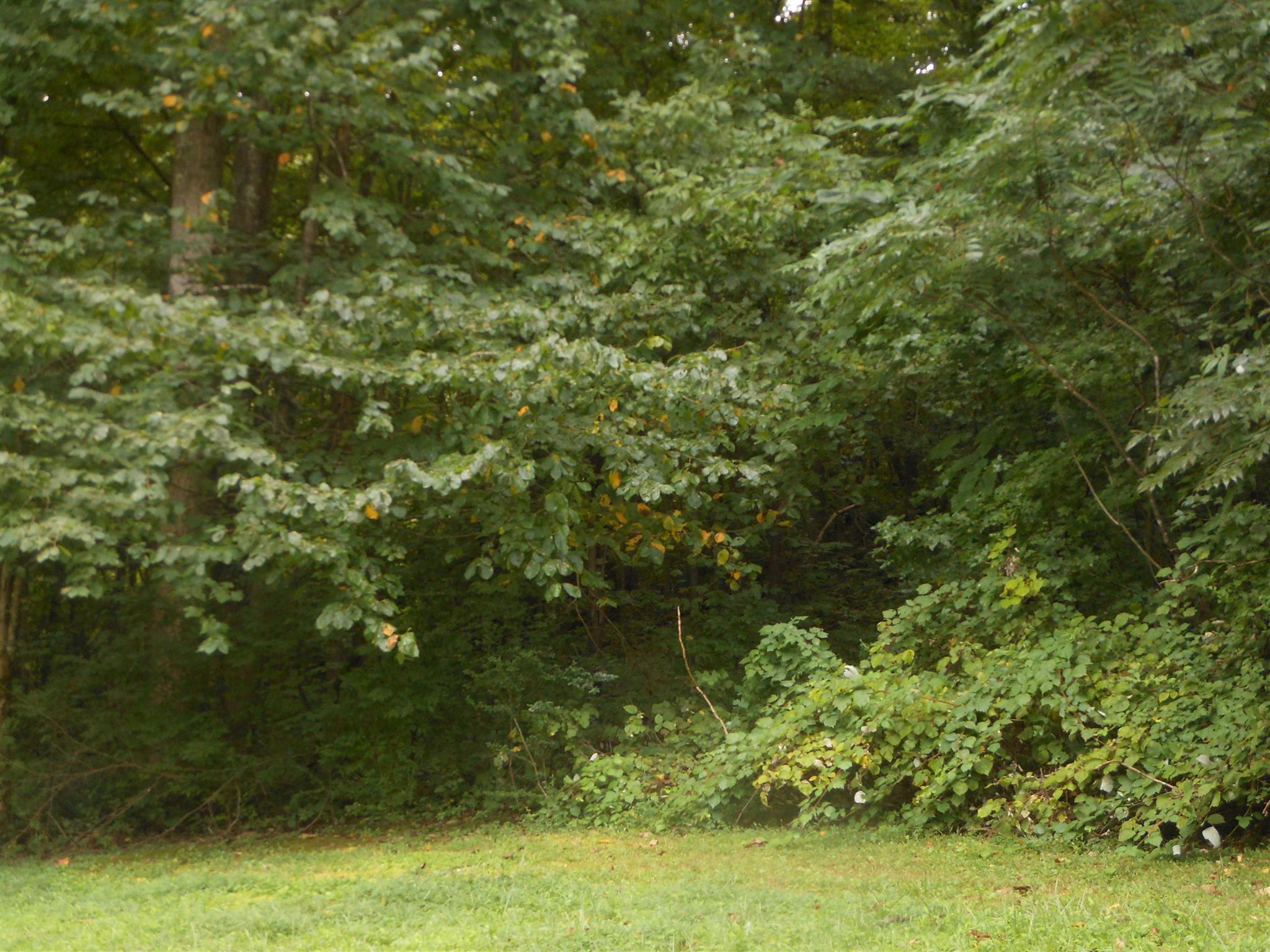 0 Tranham Rd, Whites Creek, TN 37189 - Whites Creek, TN real estate listing