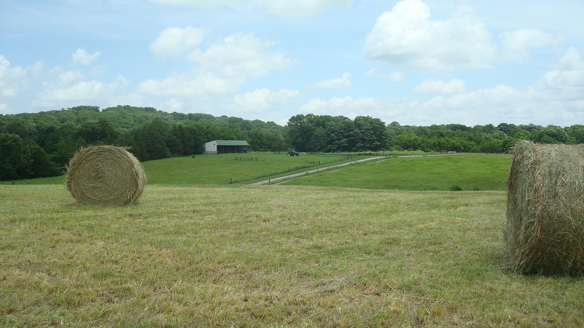 1344 Redbud Ln, Columbia, TN 38401 - Columbia, TN real estate listing