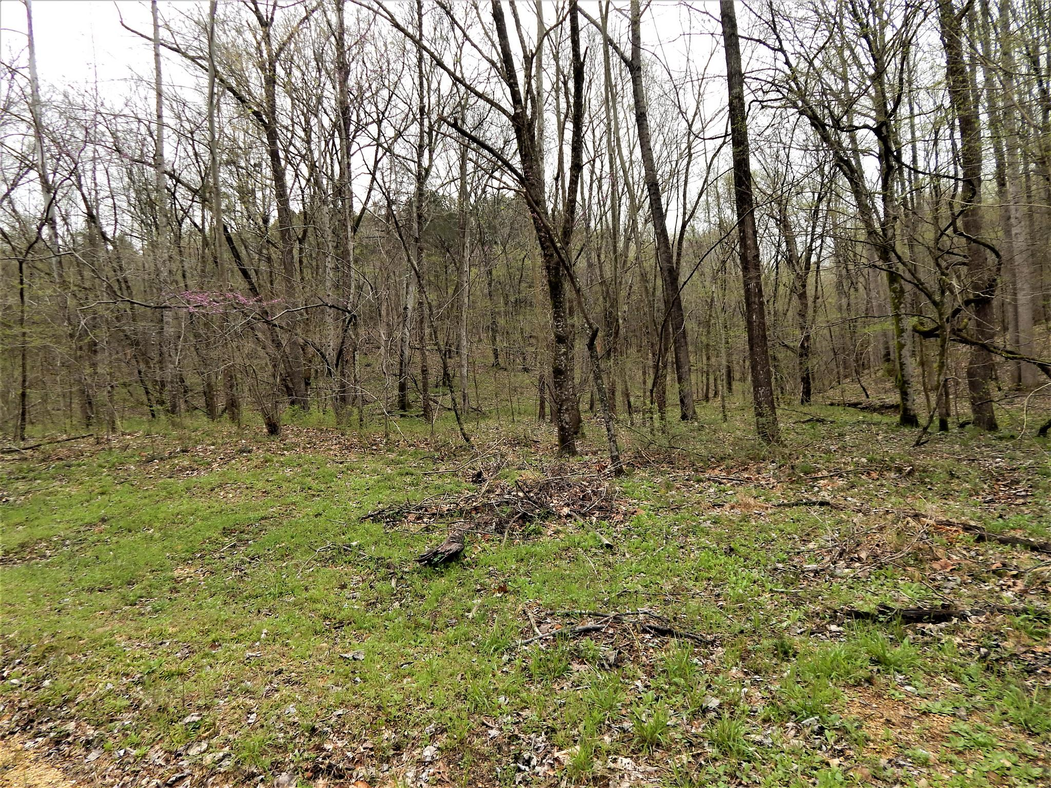 0 Warren Hollow Rd, Clifton, TN 38425 - Clifton, TN real estate listing
