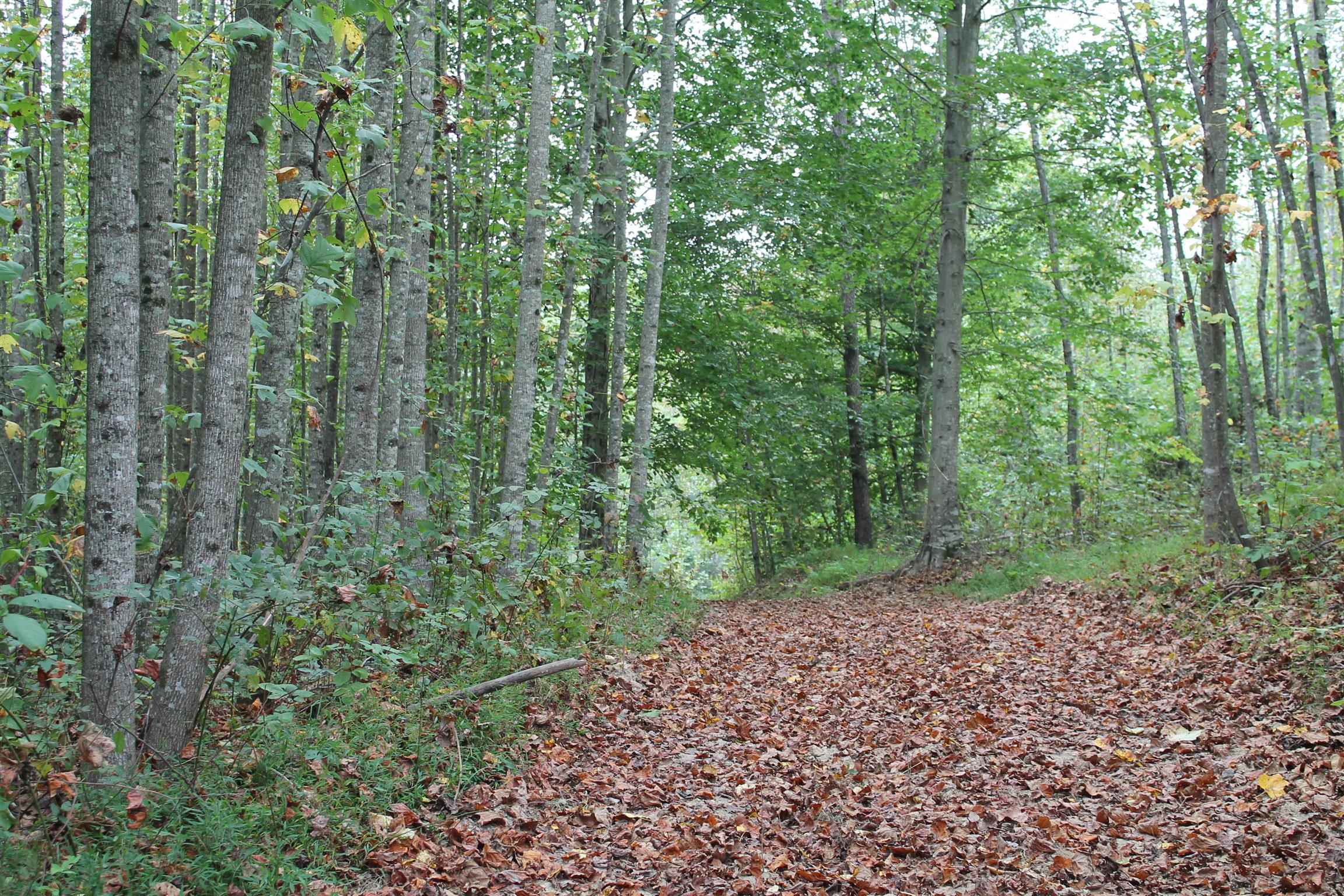 0 Cotton Hollow Road, Red Boiling Springs, TN 37150 - Red Boiling Springs, TN real estate listing