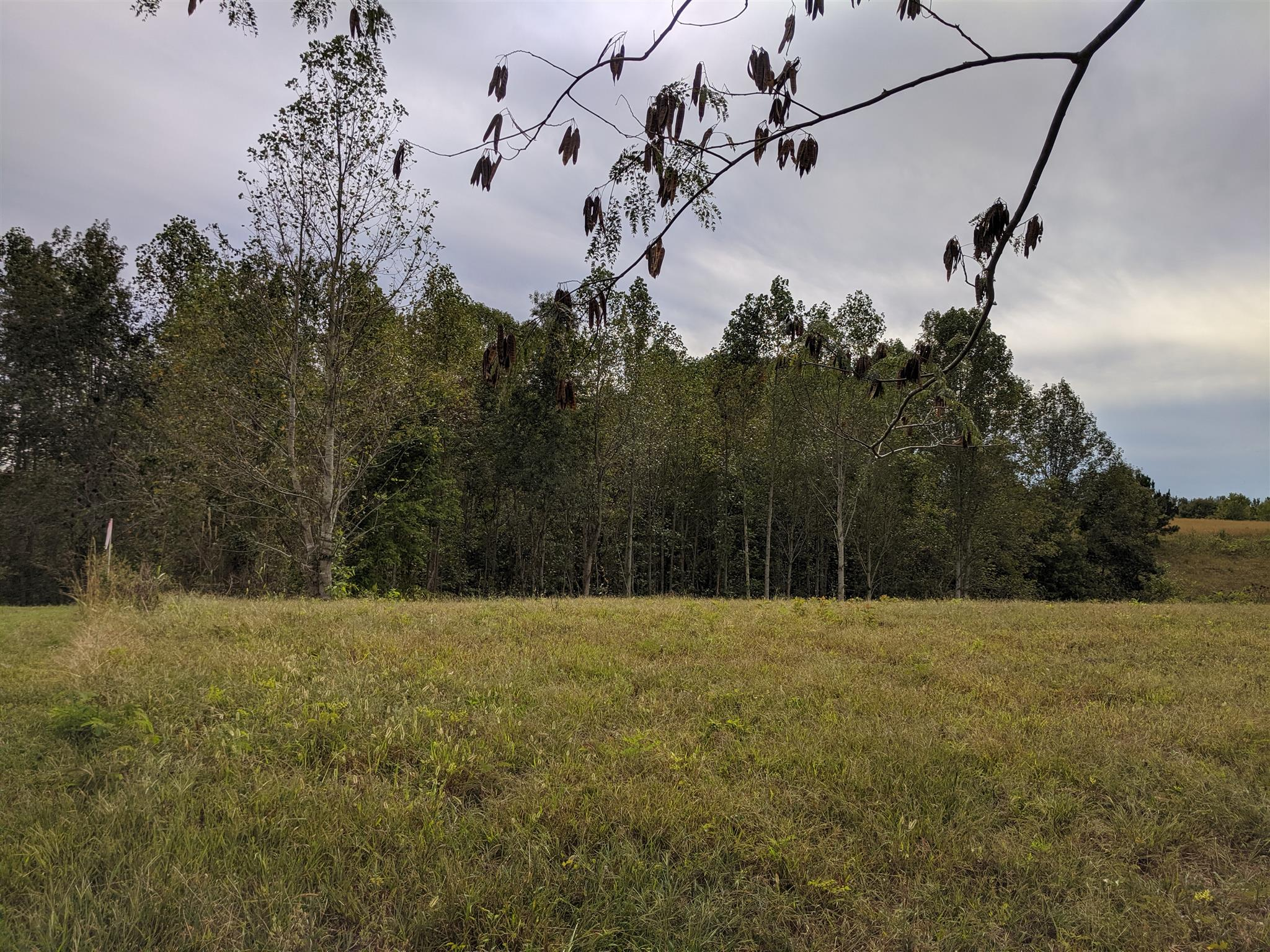 0 Andy Anderson Rd Property Photo - Lynchburg, TN real estate listing