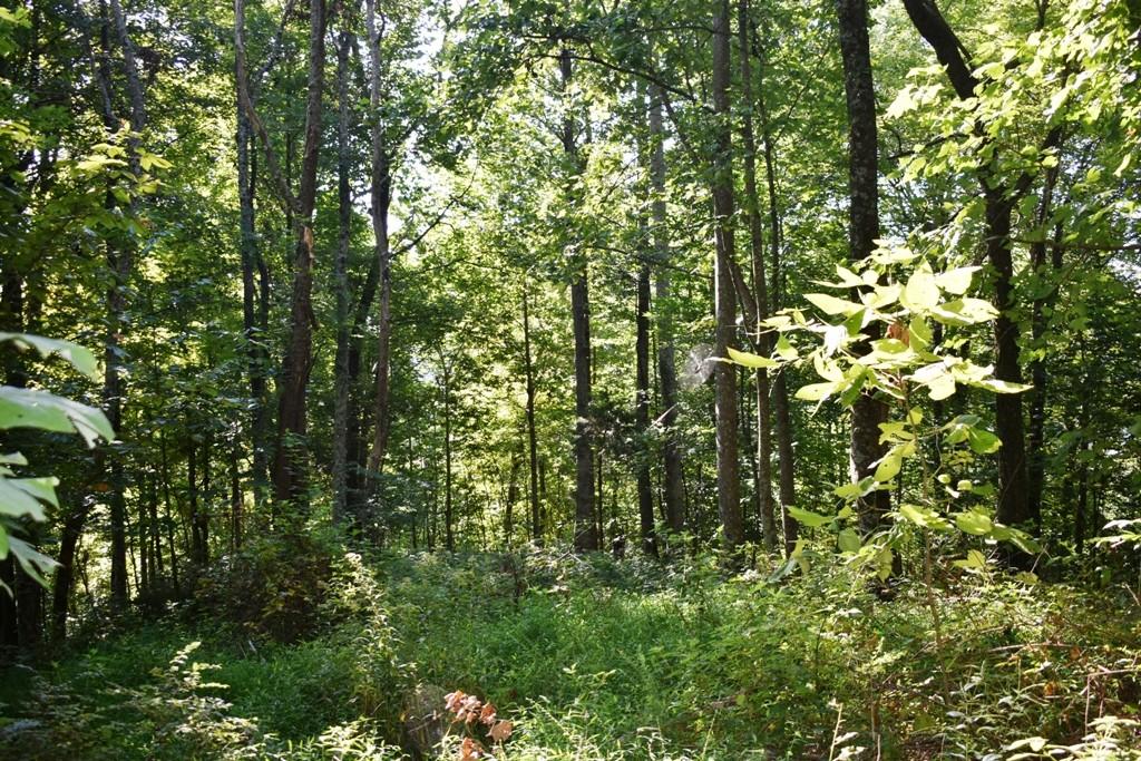 0 Dean Hill Rd, Pleasant Shade, TN 37145 - Pleasant Shade, TN real estate listing