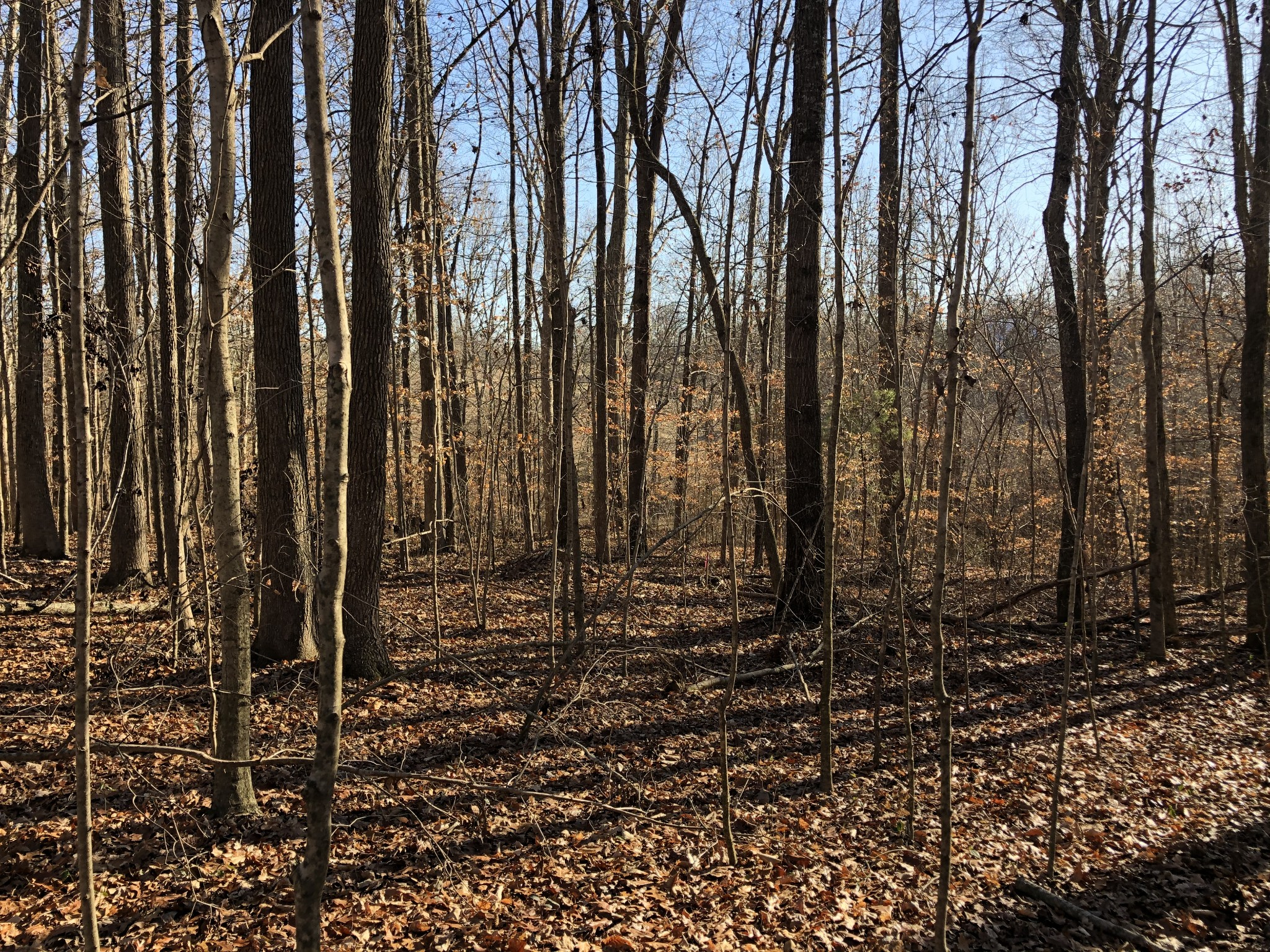 1.858 Acres Real Estate Listings Main Image