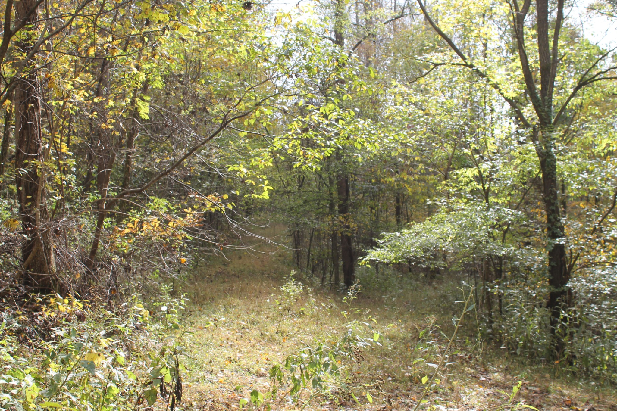 0 Hix Hollow Road, Gainesboro, TN 38562 - Gainesboro, TN real estate listing