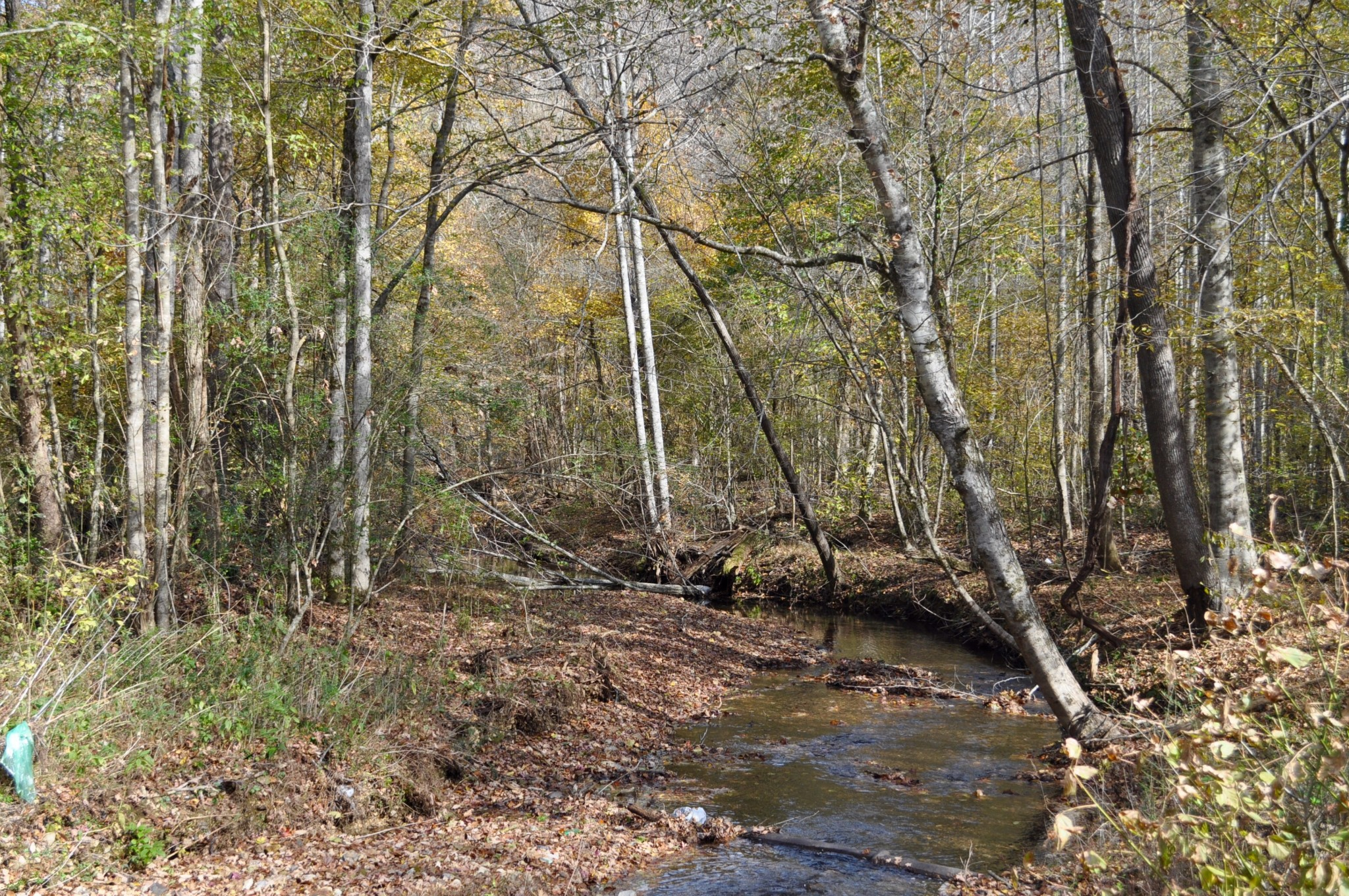 0 Teal Hollow Property Photo - Kelso, TN real estate listing