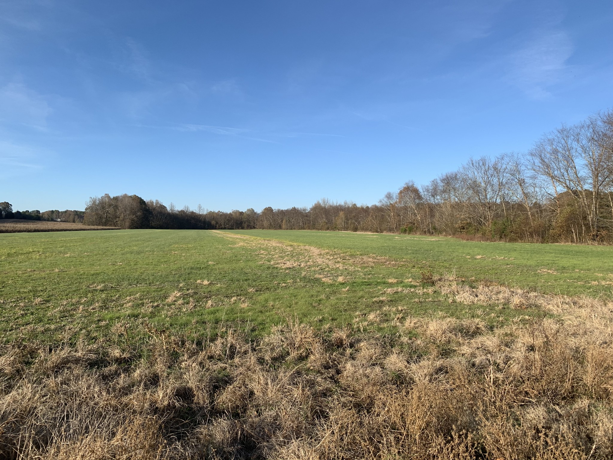0 Doe Creek Property Photo - Sardis, TN real estate listing