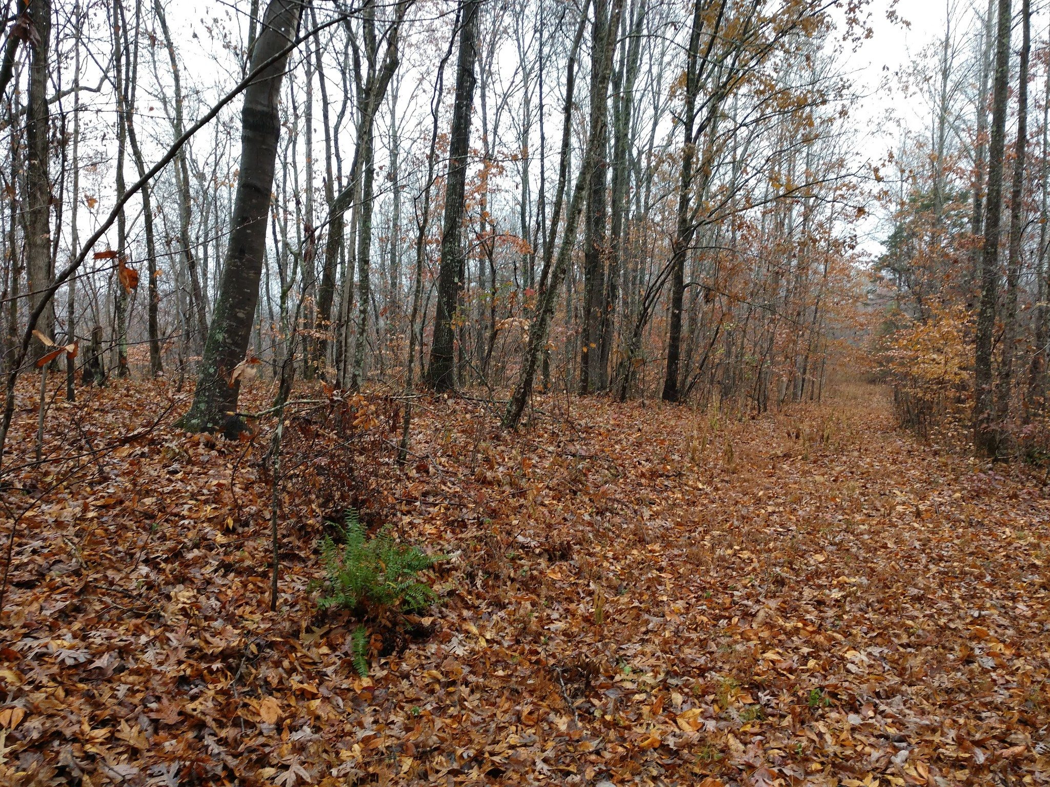 0 Four Seasons Rd Property Photo - Smithville, TN real estate listing
