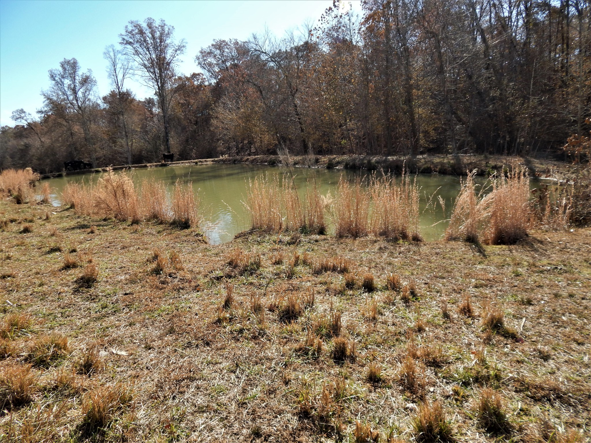 1198 David Patterson Rd, Lutts, TN 38471 - Lutts, TN real estate listing
