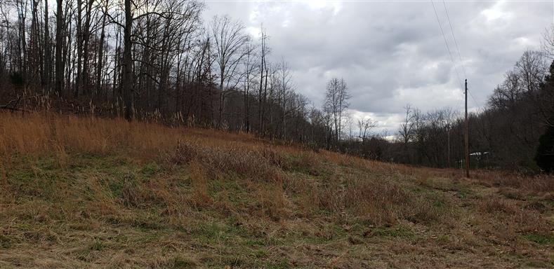 7 Campbellsville Pike, Lynnville, TN 38472 - Lynnville, TN real estate listing