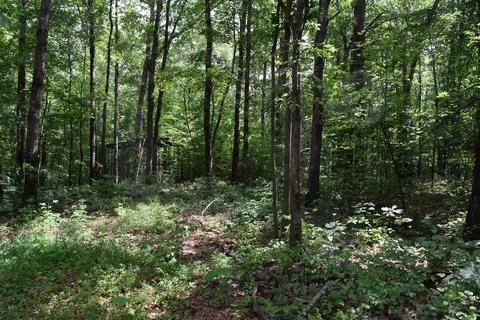 200 4th Property Photo - Altamont, TN real estate listing