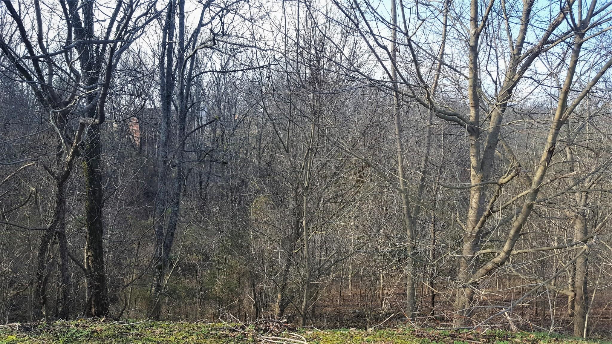 0 Highbridge DR, Smithville, TN 37166 - Smithville, TN real estate listing