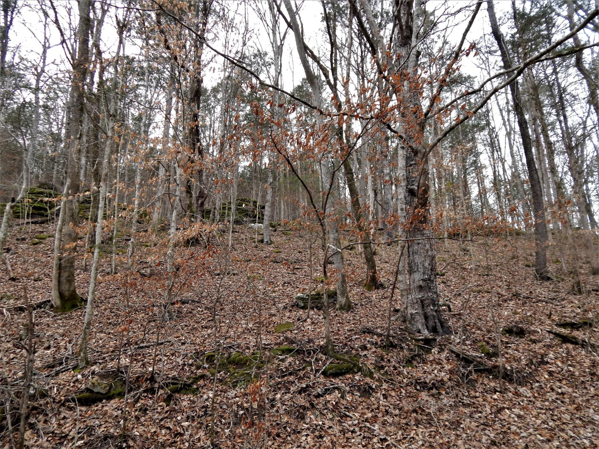 0 beech creek road Property Photo - Waynesboro, TN real estate listing