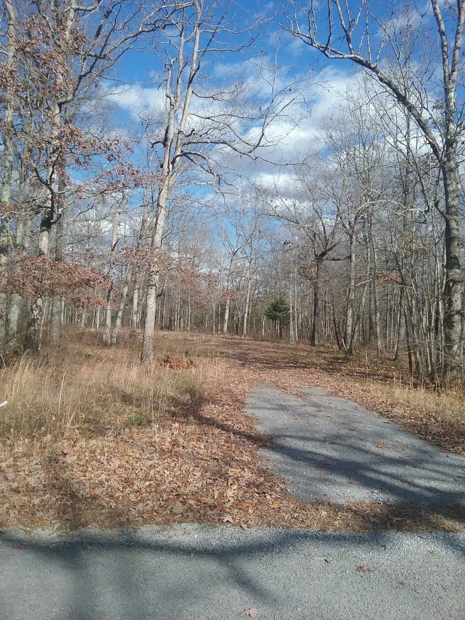 0 Goldenview CT Property Photo - Beechgrove, TN real estate listing