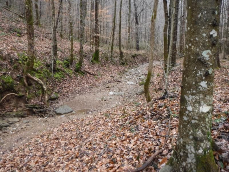 72 .71ac Hinds Chapel Rd Property Photo - Jamestown, TN real estate listing