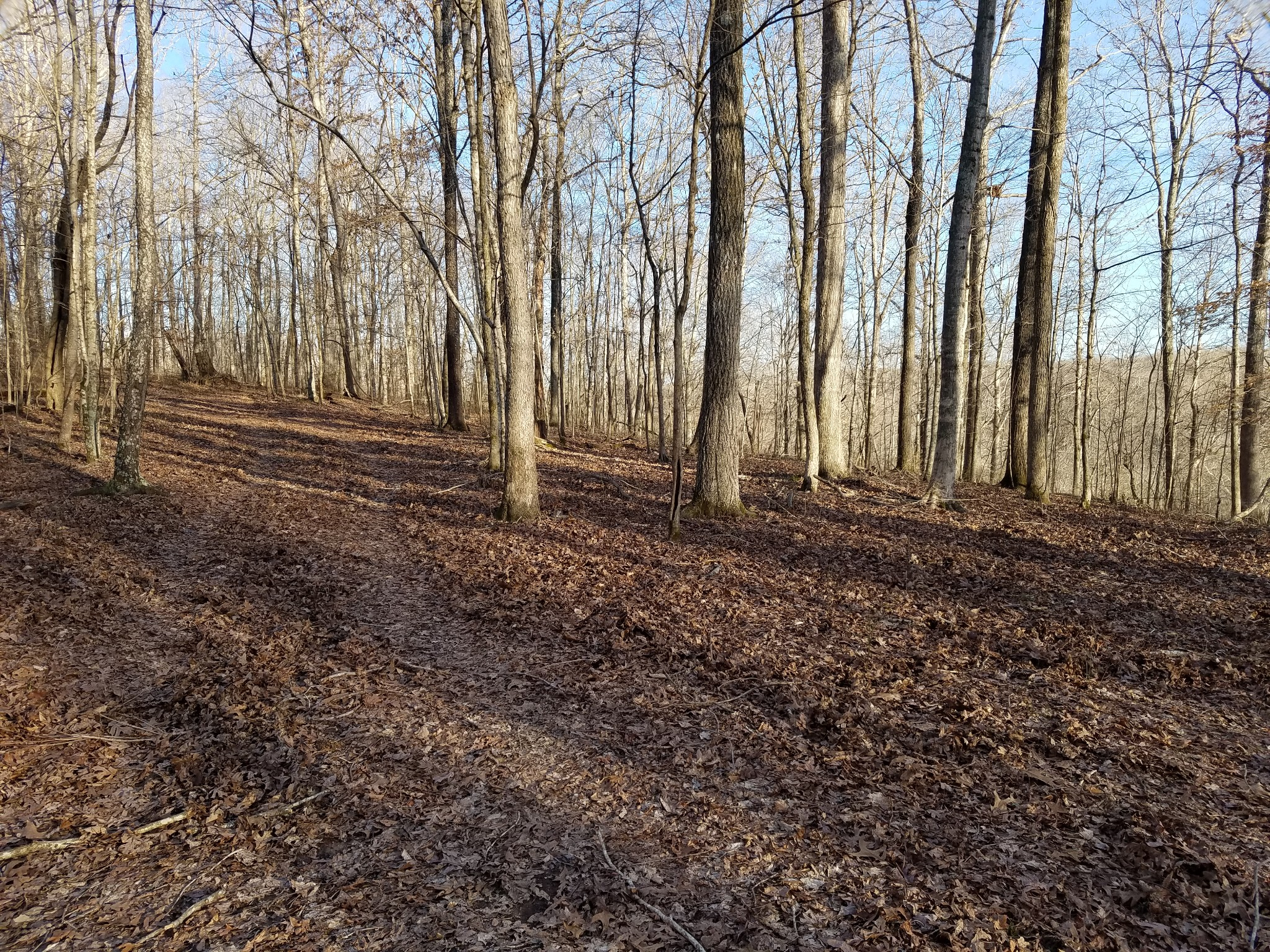 0 Stewart Branch Rd Property Photo - Hurricane Mills, TN real estate listing