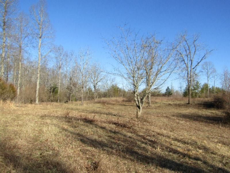 204 Rock Creek Road Property Photo - Deer Lodge, TN real estate listing