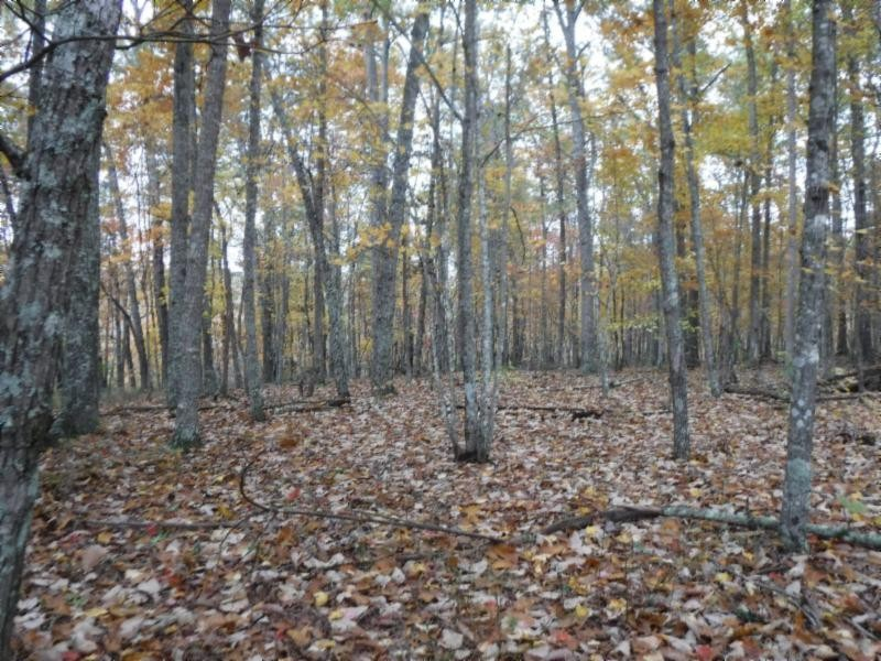 12 .74ac Arrowhead Rd Property Photo - Moss, TN real estate listing