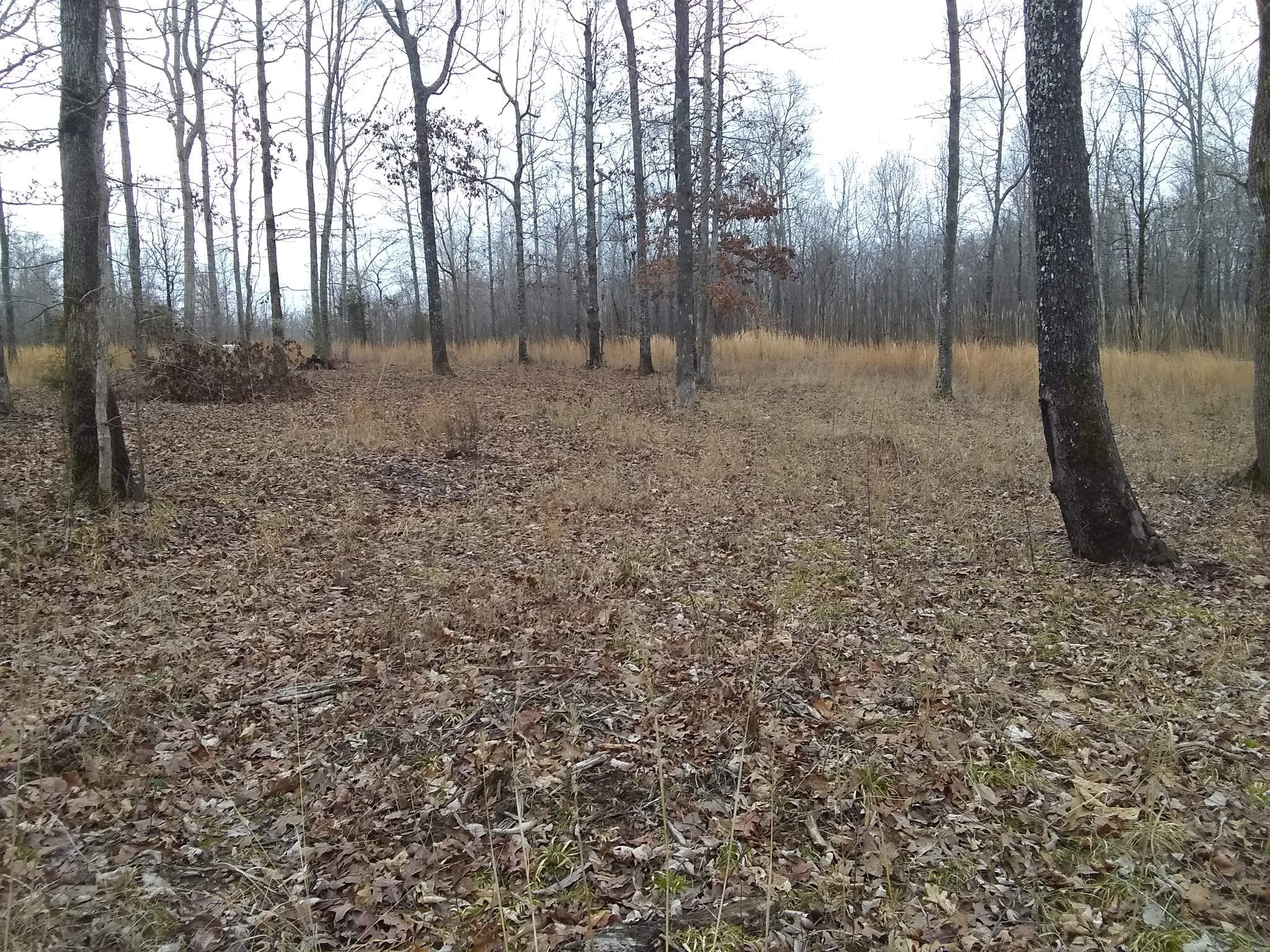 2671 Brodies Landing RD Property Photo - Parsons, TN real estate listing