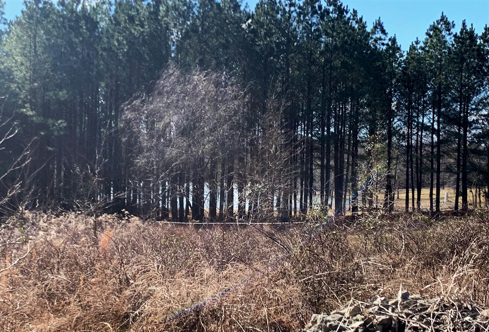 0 Bohannon Landing RD, Sugar Tree, TN 38380 - Sugar Tree, TN real estate listing