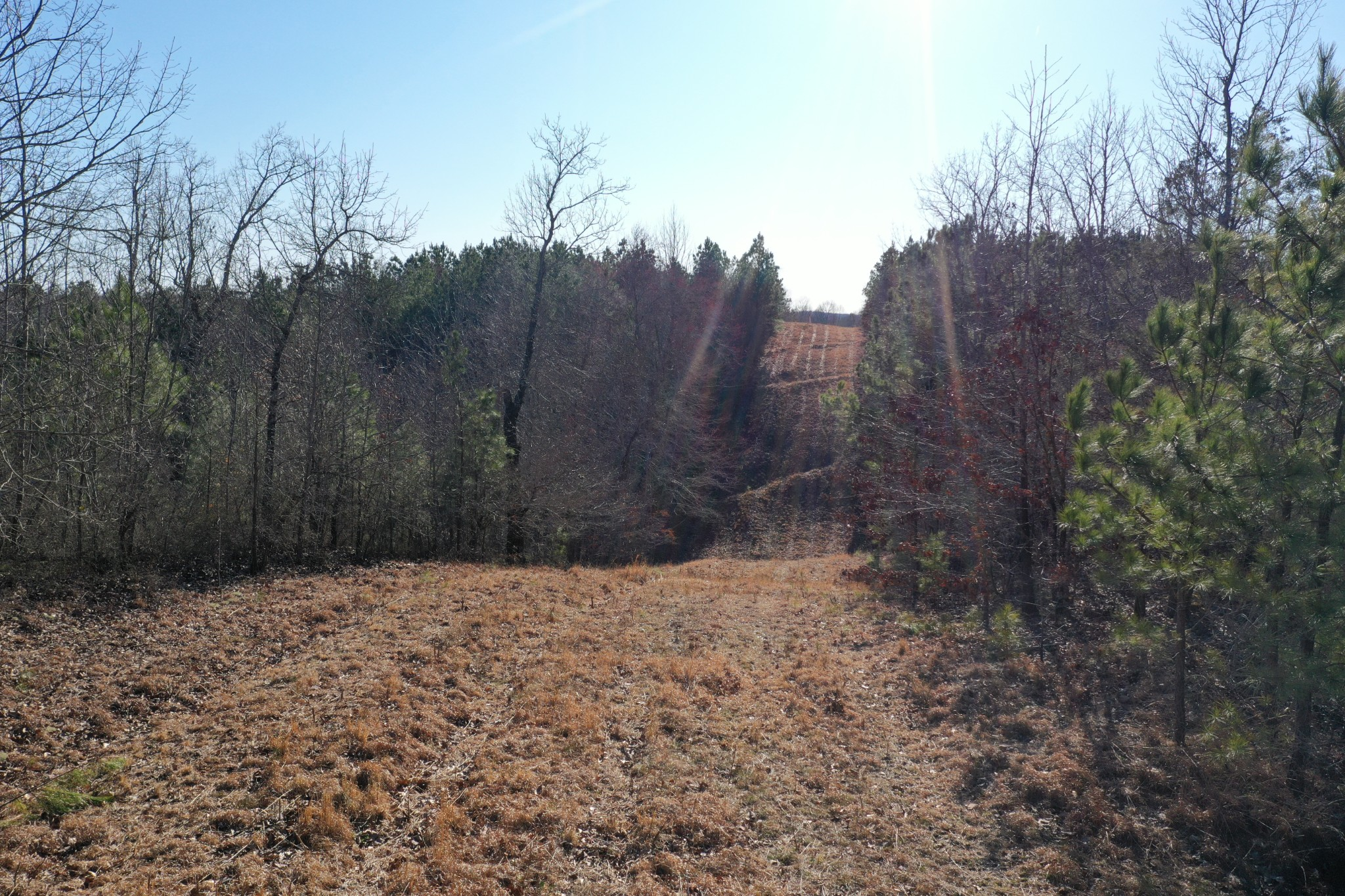 0 Ledbetter Hollow Rd Property Photo - Linden, TN real estate listing