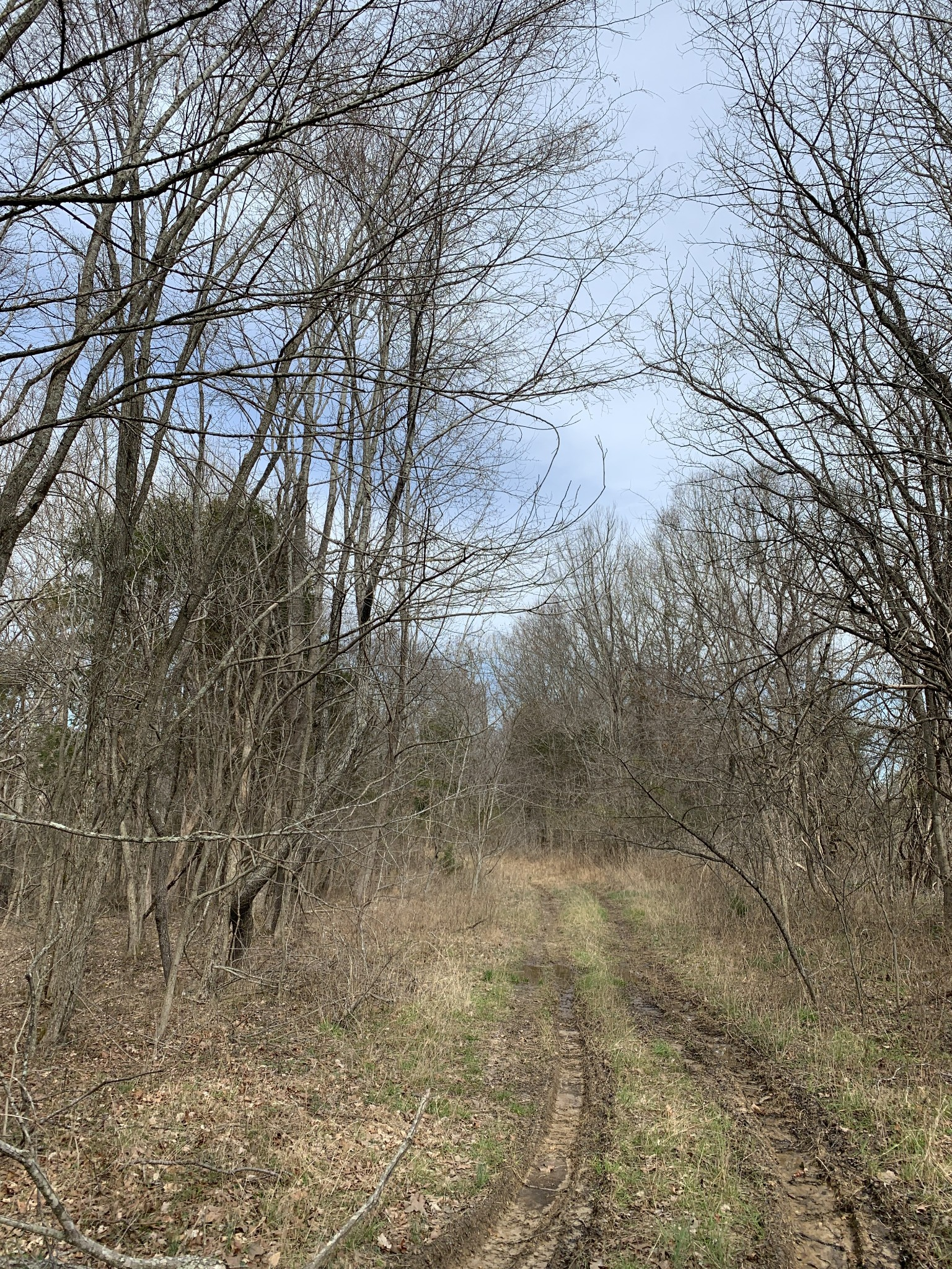 0 Shelter Branch RD Property Photo - Cumberland Furnace, TN real estate listing